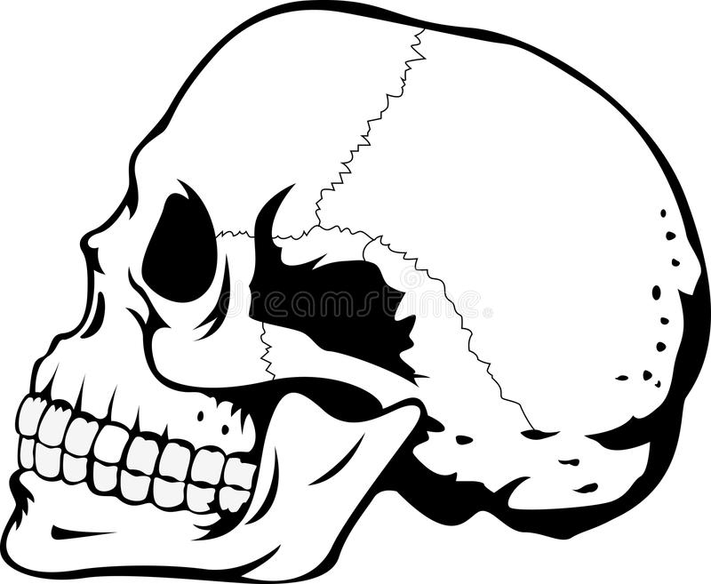 Human Skull Stock Images