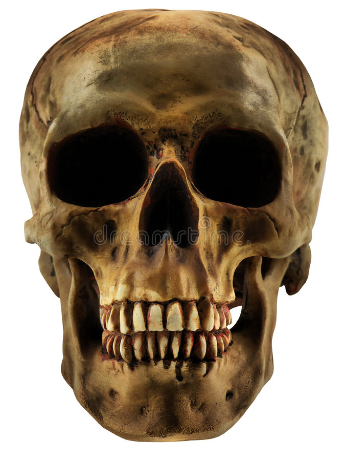 Download Human Skull stock image. Image of bone, dead, skeleton - 3322837