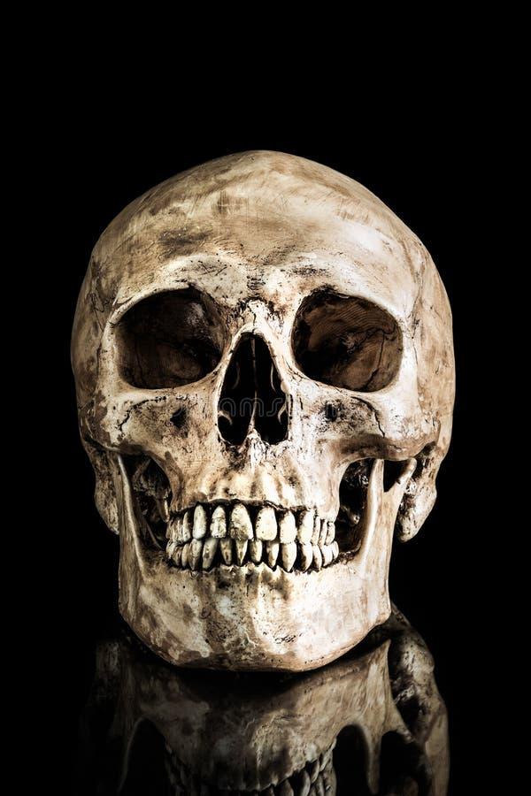 Free Human Skull Royalty Free Stock Photos - 37235158