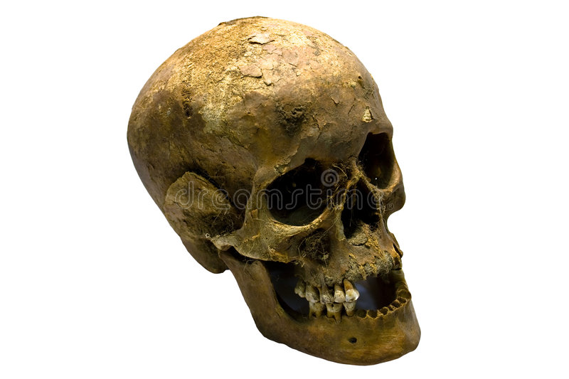 Human Skull. An old skull of a human being royalty free stock image