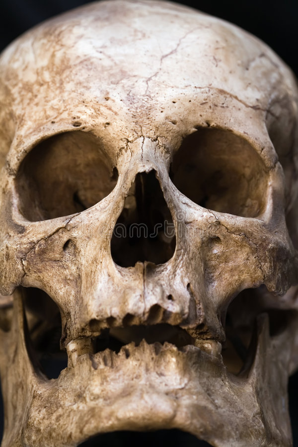 Download Human skull stock image. Image of macro, death, white - 7495361
