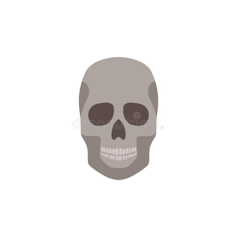 Human skull anatomically correct front view flat vector illustration isolated on white background. vector illustration
