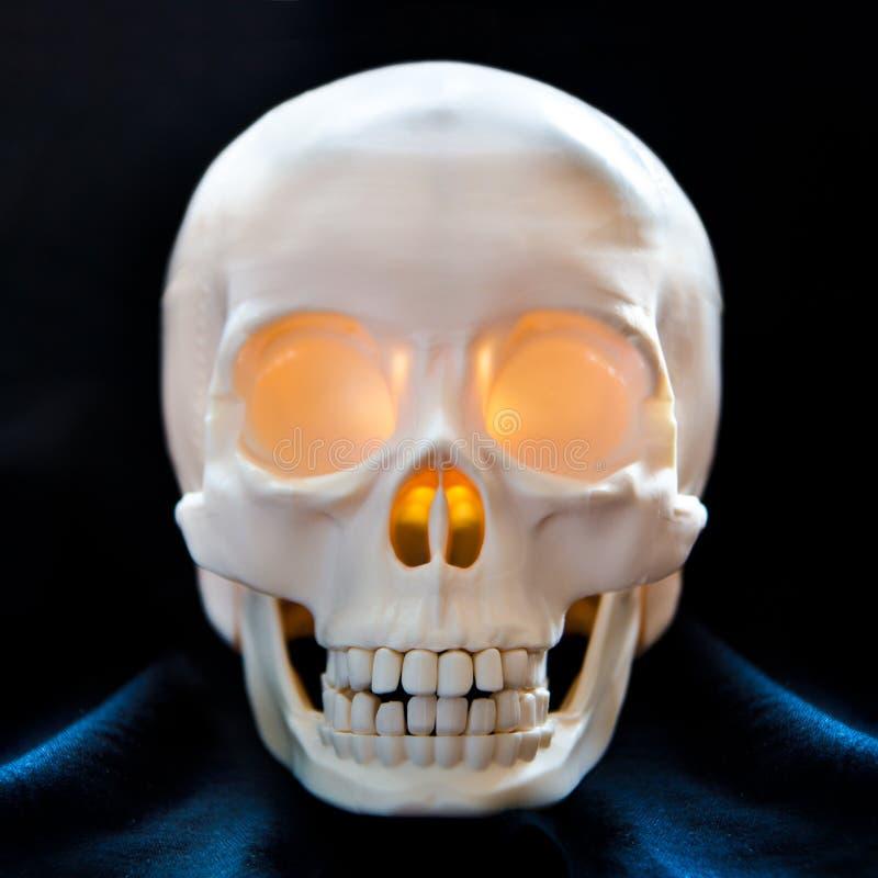 Download Human skull stock image. Image of background, closeup - 31140459