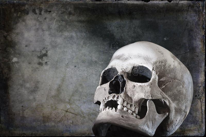 Human Skull on Black Grunge Background royalty free stock image