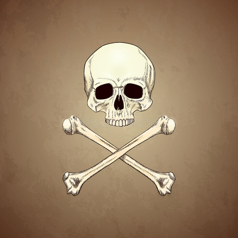 Human Skull and Bones on Old Paper Background. royalty free illustration
