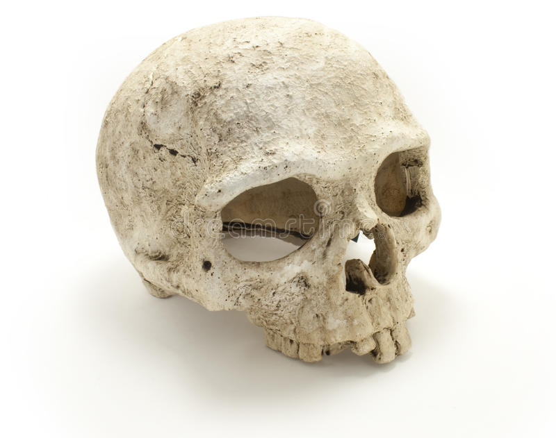 Human skull bones side view ISOLATED. Old jaw-less Human Skull isolated against white background. Anatomy illustration. Medical image. Sign of death. Symbol of stock photo