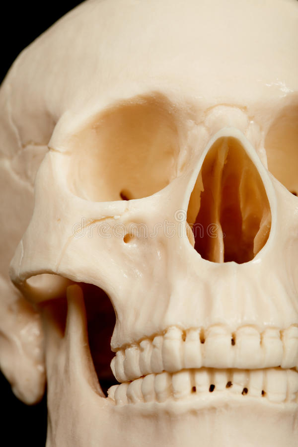 Download Human Skull Closeup Stock Image - Image: 14003121
