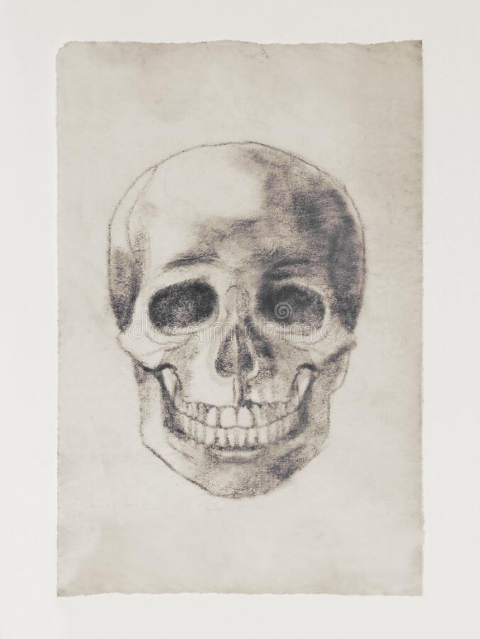 Human skull. Drawing by hand with a simple pencil. Old drawing stock photography