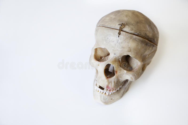Human skull for drawing. Isolated on the white background stock images