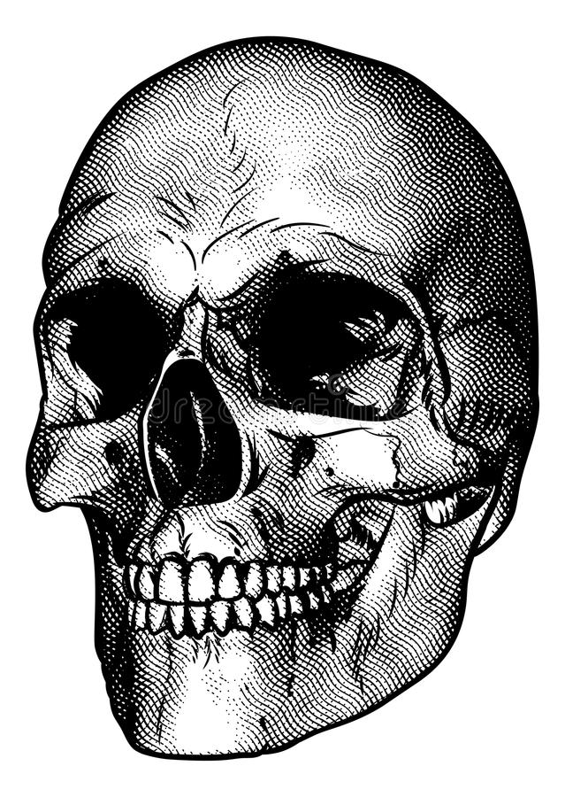 download human skull drawing stock vector image of bone carved 90648124