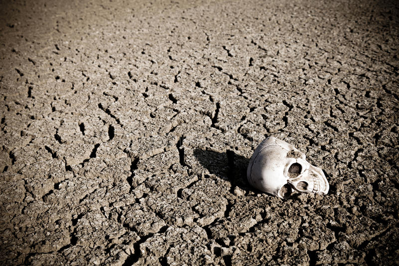 Human skull on dry land royalty free stock photos