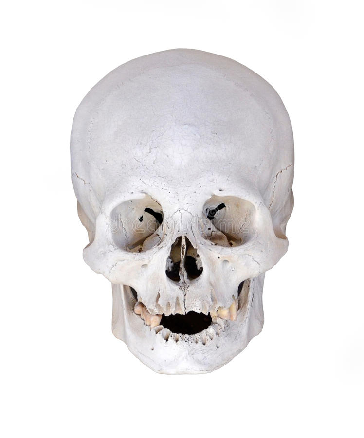 Download Human Skull From Excavations Isolated On White Stock Photography - Image: 21351252