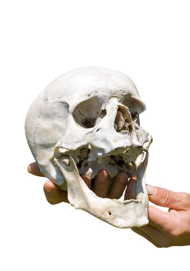 Human Skull On Hand 8 Stock Photography