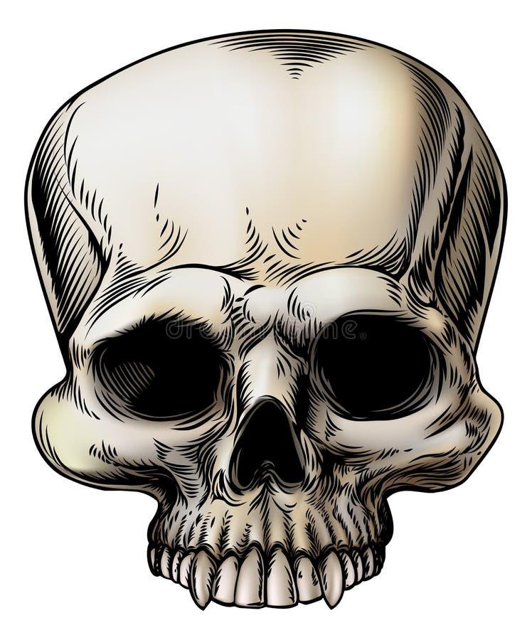 Human skull illustration vector illustration