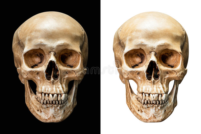 Human skull isolated royalty free stock photography