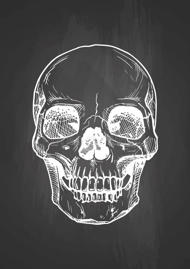 Human skull with a lower jaw stock illustration