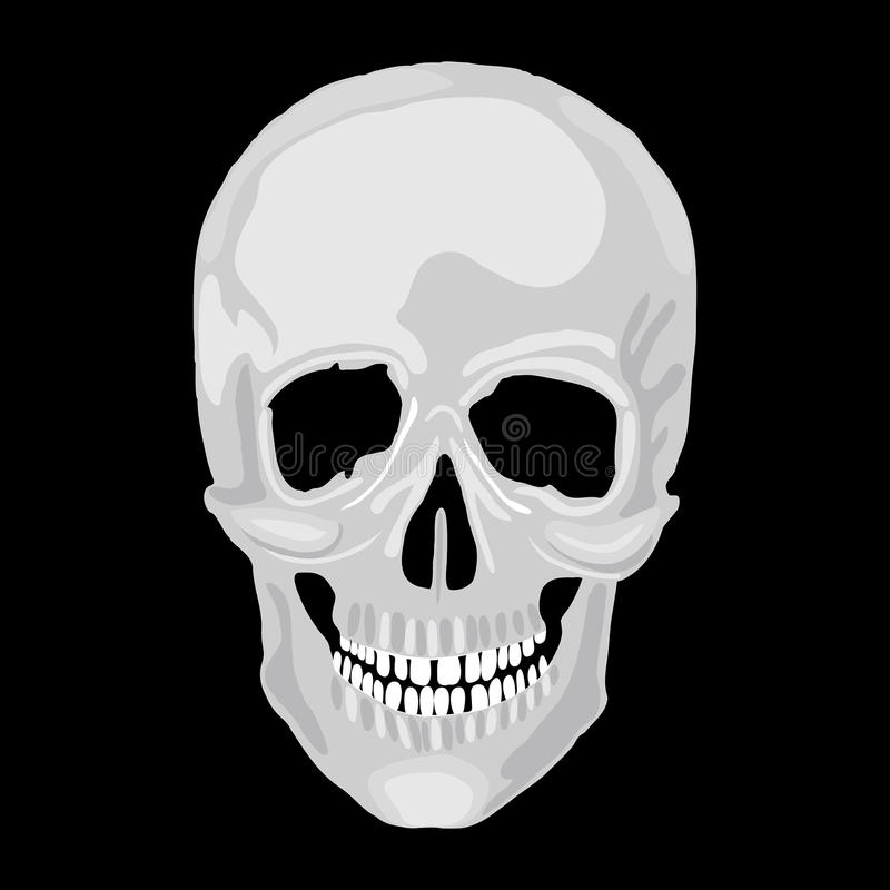 Human skull model. royalty free illustration