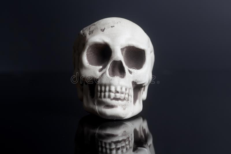 Human Skull Model On Black Background Stock Photo Image Of Anatomy