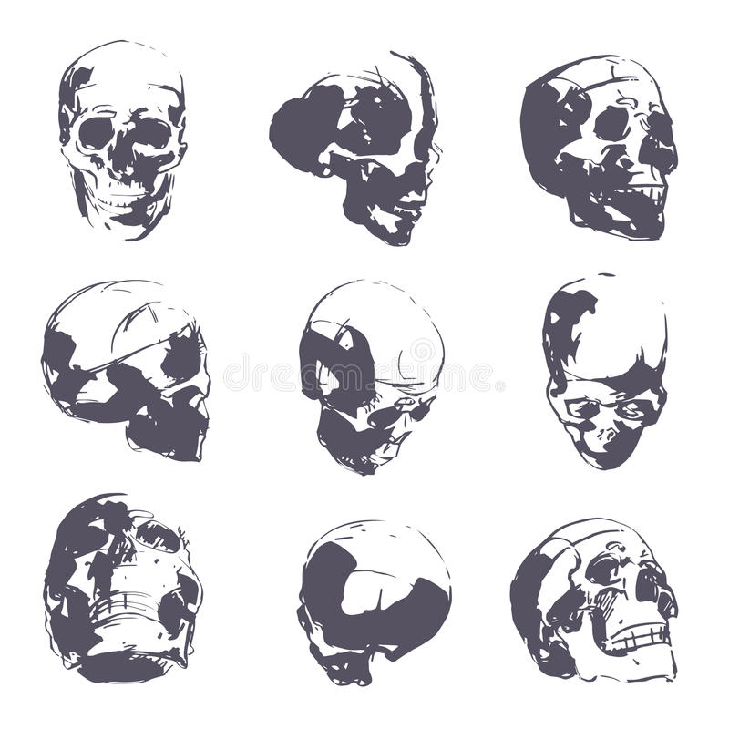 Human skull in rough sketch. Man head anatomy hand-drawn vector royalty free illustration