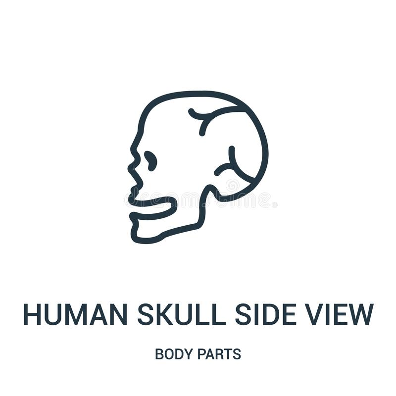 human skull side view icon vector from body parts collection. Thin line human skull side view outline icon vector illustration royalty free illustration
