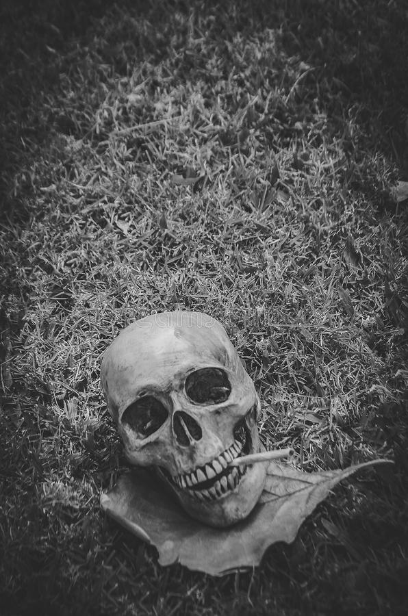 Human skull smoking the cigarette on grass background , Vintage black white tone , still life photography style.  stock photo