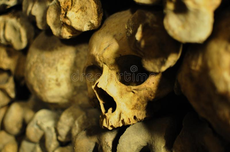 Human skulls in the catacombs of Paris, France royalty free stock images