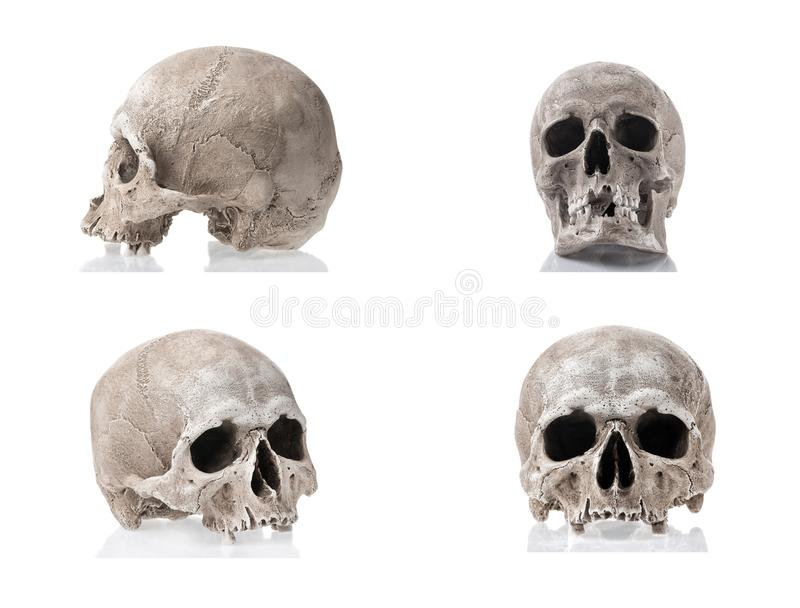 Human skulls isolated on white background with reflections. Side and front views collage set. Anatomy and medicine concept. stock image