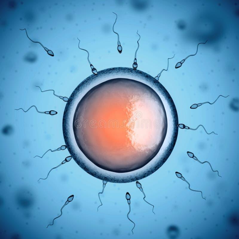 Human sperm cells around egg cell stock illustration
