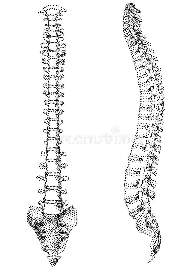 Human spine. Ink style illustration on white background vector illustration