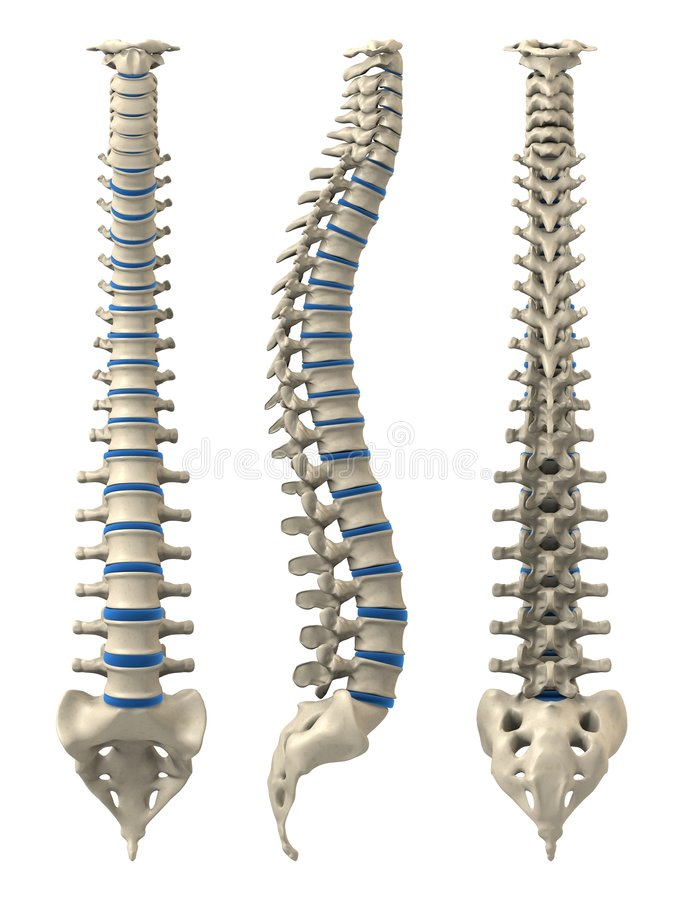 Human spine. 3d rendered anatomy illustration from different views of a human spine royalty free illustration