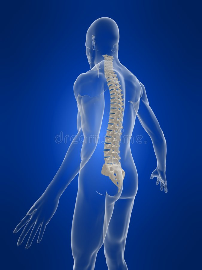 Human spine. 3d rendered anatomy illustration of a human body shape with spine stock illustration
