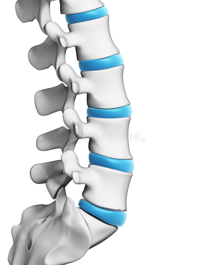 Human spine. 3d rendered illustration - human spine stock illustration
