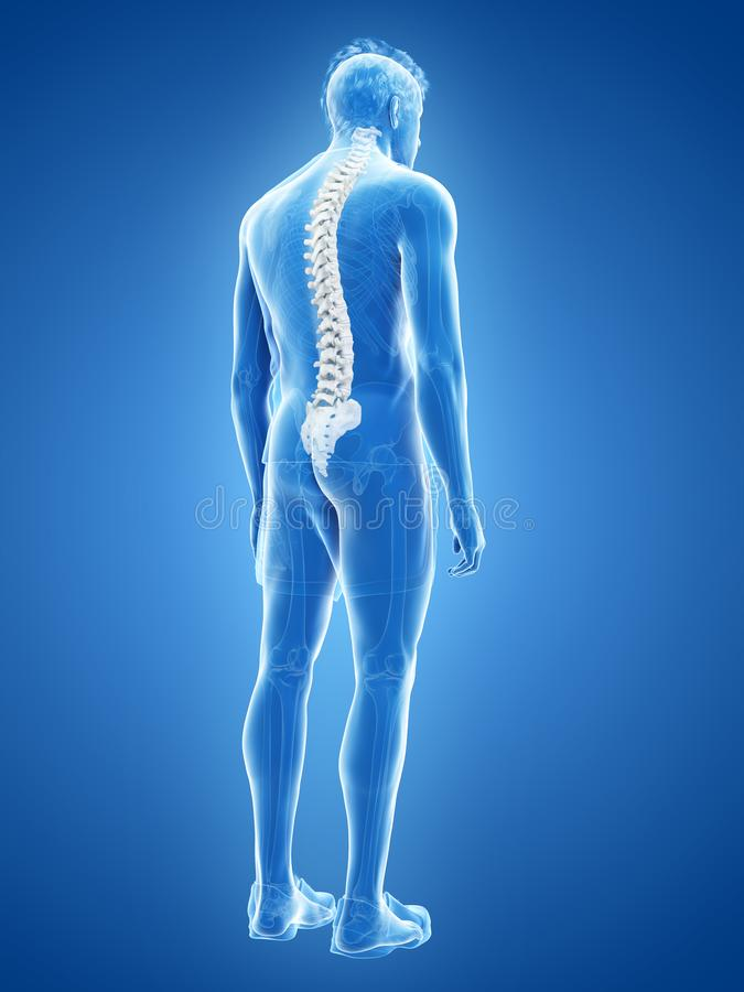 The human spine. 3d rendered medically accurate illustration of the human spine stock illustration