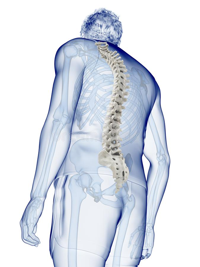the human spine vector illustration