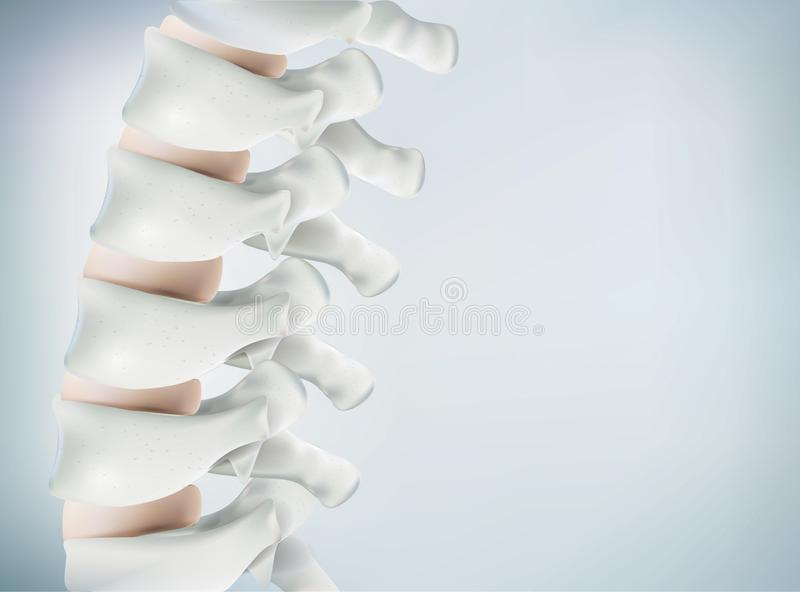The human spine image is realistic. Shows the medical accuracy of human skeleton and 3D rendering. stock illustration