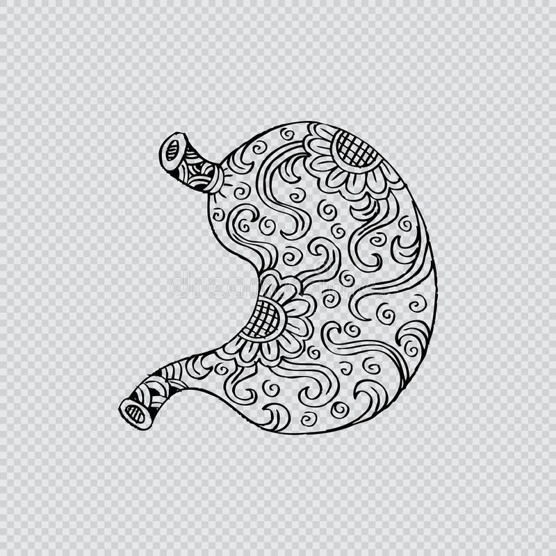 Human stomach. In doodle style royalty free illustration