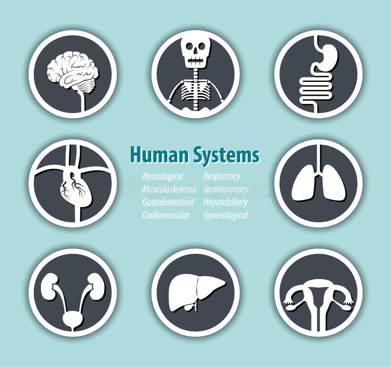 Human Systems Icon stock illustration
