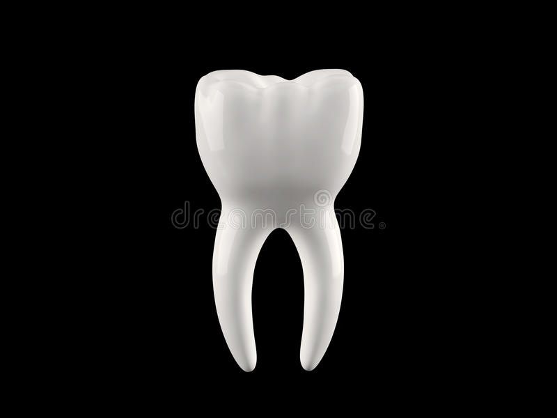 Human tooth royalty free stock images