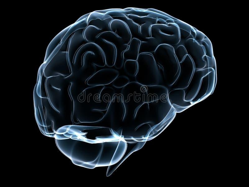 Human transparent brain vector illustration