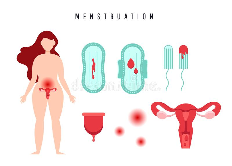 Human uterus and ovaries. Female menstruation concept. Uterus with ovarian organ, swabs, gasket, menstrual cup and blood stock illustration