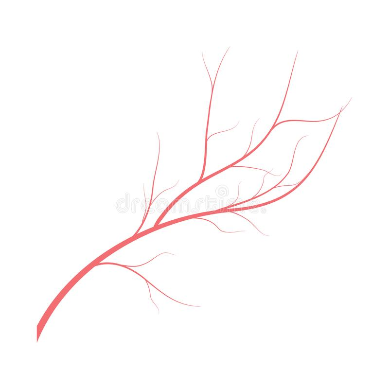 Human veins, red blood vessels design on white backgroun. Vector illustration. Human veins, red blood vessels design on white backgroun. Vector vector illustration