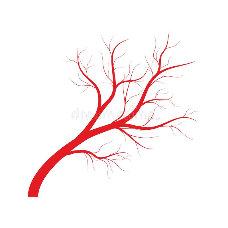 Human veins, red blood vessels design on white backgroun. Vector illustration. Human veins, red blood vessels design on white backgroun. Vector stock illustration