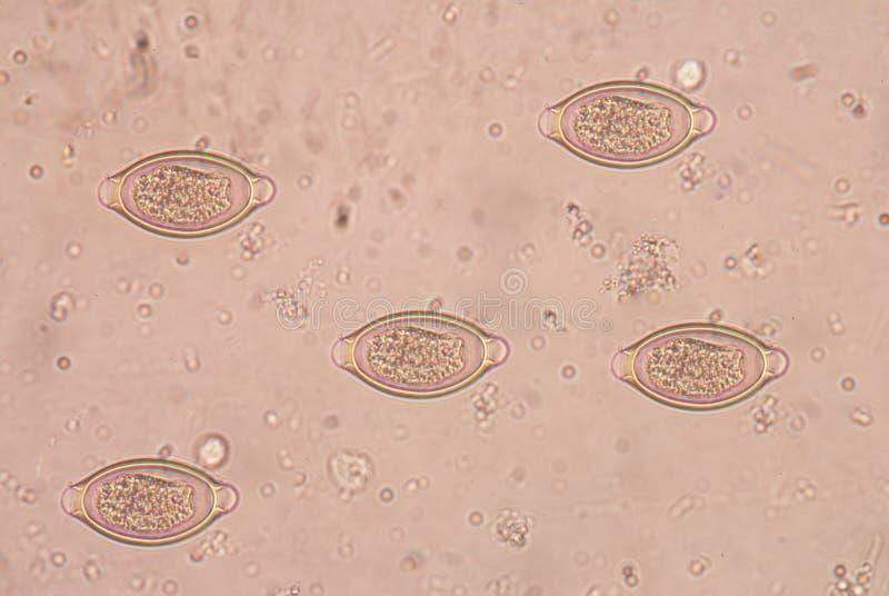 kenet eredmények a mikroflóra dekódolásához