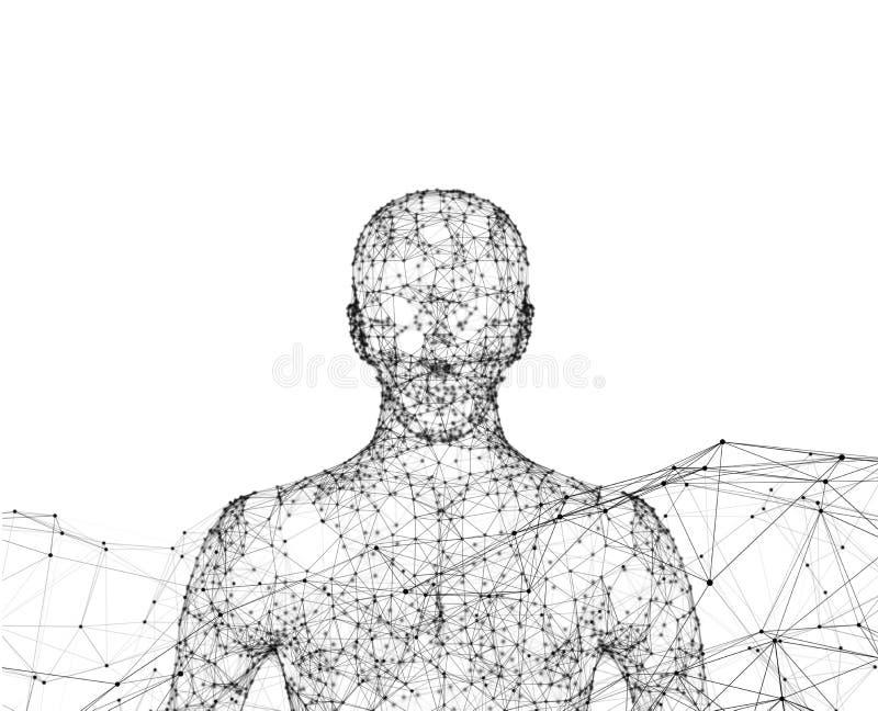 human Wireframe model z związkiem wykłada na białym tle royalty ilustracja