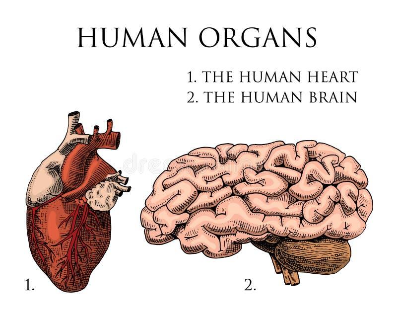 Ungewöhnlich Humanbiologie Und Anatomie Fotos - Menschliche Anatomie ...