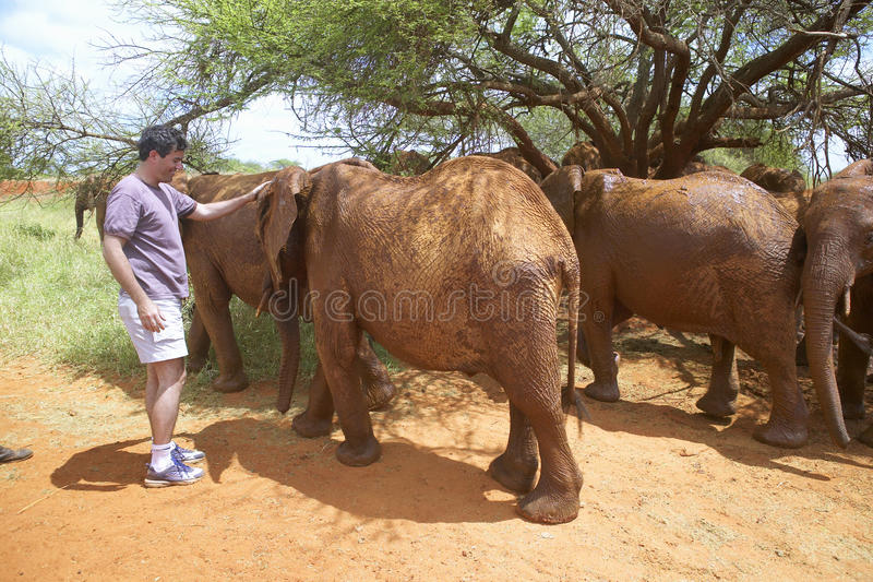 Humane society Chief Executive Officer, Wayne Pacelle, petting adopted Baby African Elephants at the David Sheldrick Wildlife. Trust in Tsavo national Park stock photo