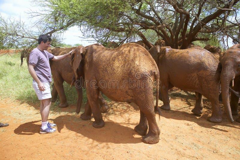 Humanitarny społeczeństwo dyrektor generalny, Wayne Pacelle, migdali adoptowanego dziecka Afrykańskich słonie przy David Sheldric zdjęcie stock