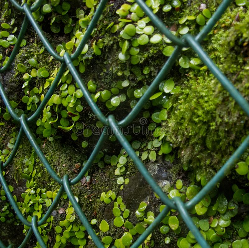 Humans are domesticating and conquering nature. Here plants are trapped behind a very symbolic green net. Global warming and greenhouse effect stock photos