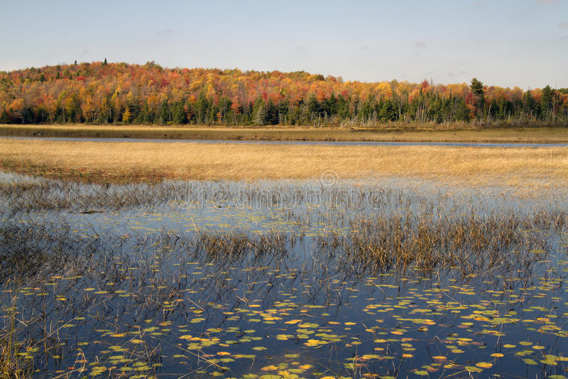 Humedal salvaje en Canadá imagen de archivo