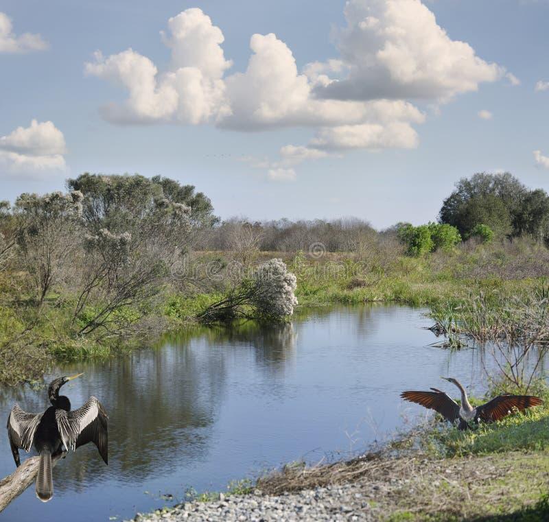 Humedales de la Florida foto de archivo libre de regalías